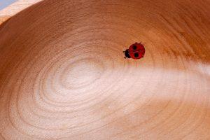 Ladybird-5081